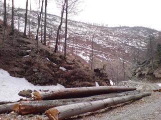Gestionarea fondului forestier