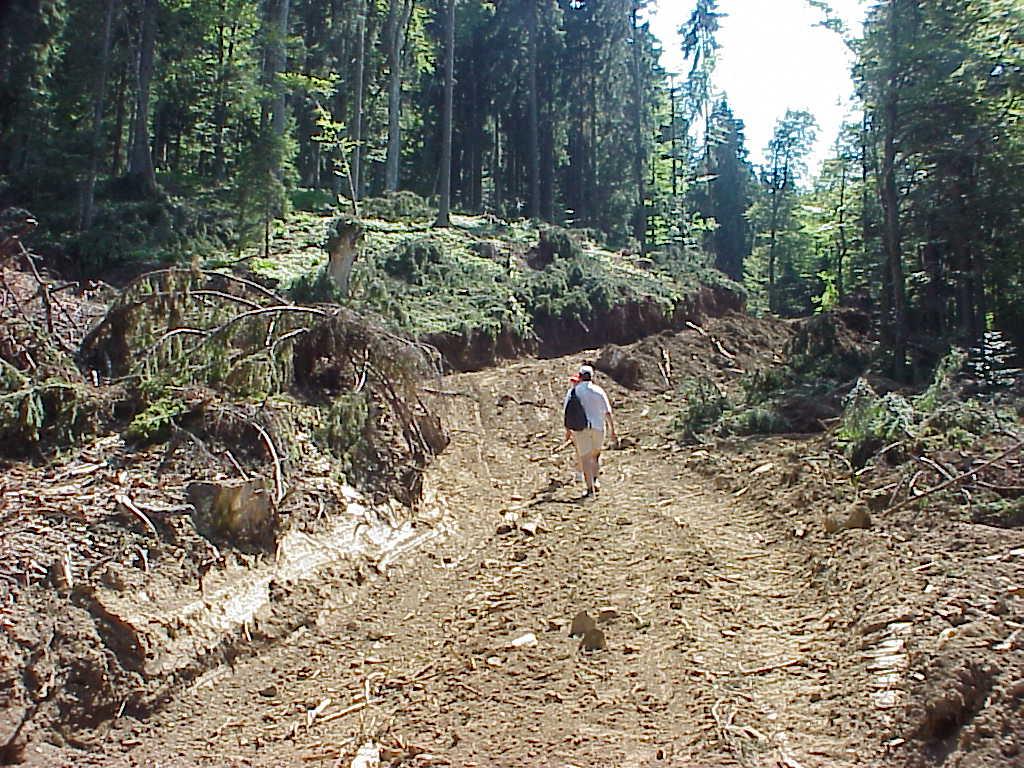 Nou drum forestier