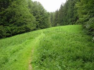 Poienile din pădure (La Preluci)